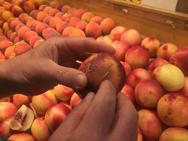 market hall produce how to buy a good nectarine 1